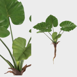 Plant-Green-Philodendron----SMALL
