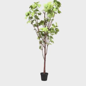 Tree-Maple-Leaf